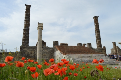 pompei_poppies_02