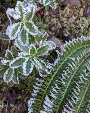 Frost in Brenta Dolomites